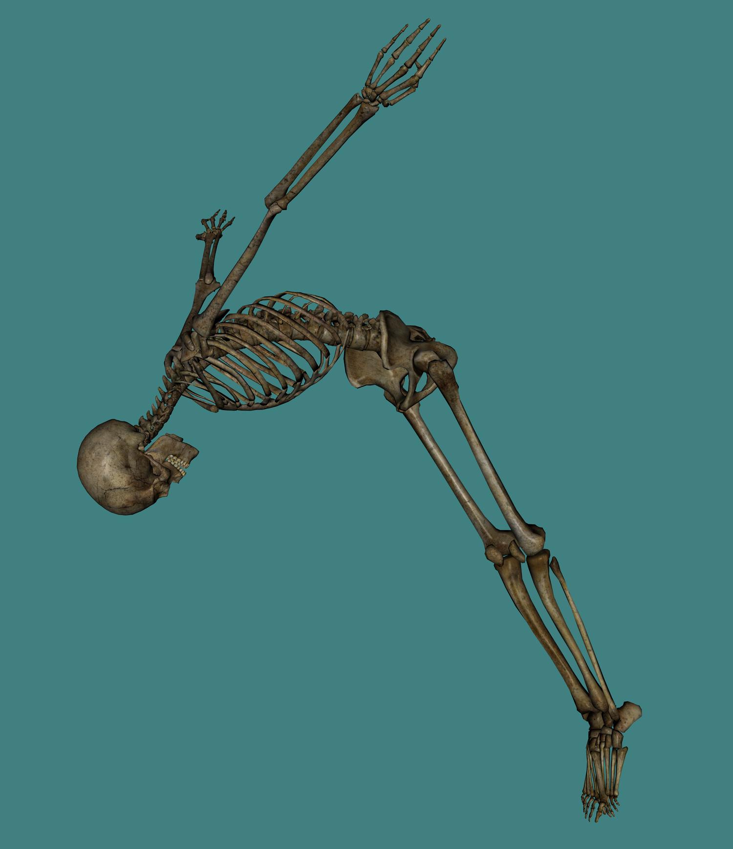Skeleton PNG - 16878
