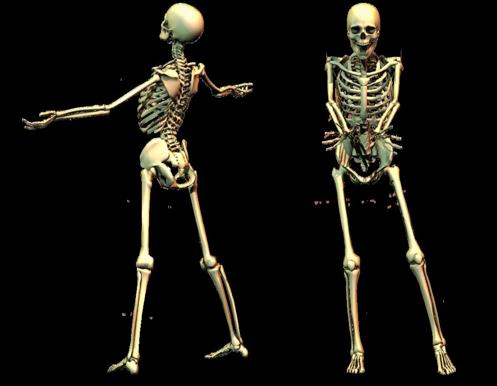 Skeleton PNG - 16877