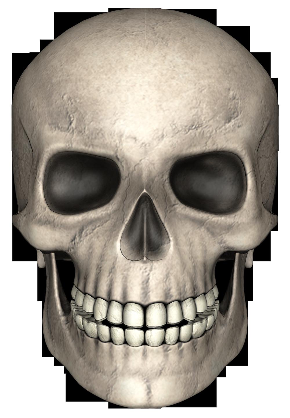 Skull PNG - 15800