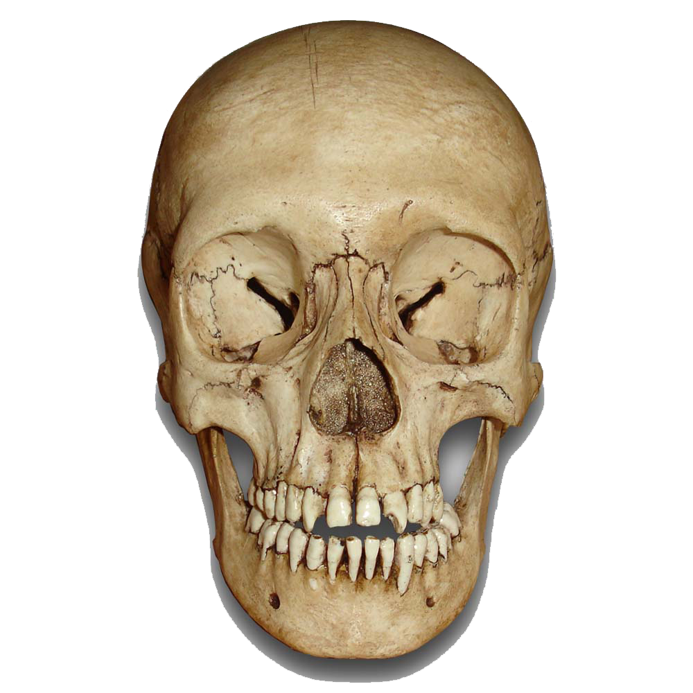 PNG File Name: Skull PNG Image Dimension: 1000x1000. Image Type: .png.  Posted on: Sep 3rd, 2016. Category: Fantasy Tags: Skull - Skull PNG