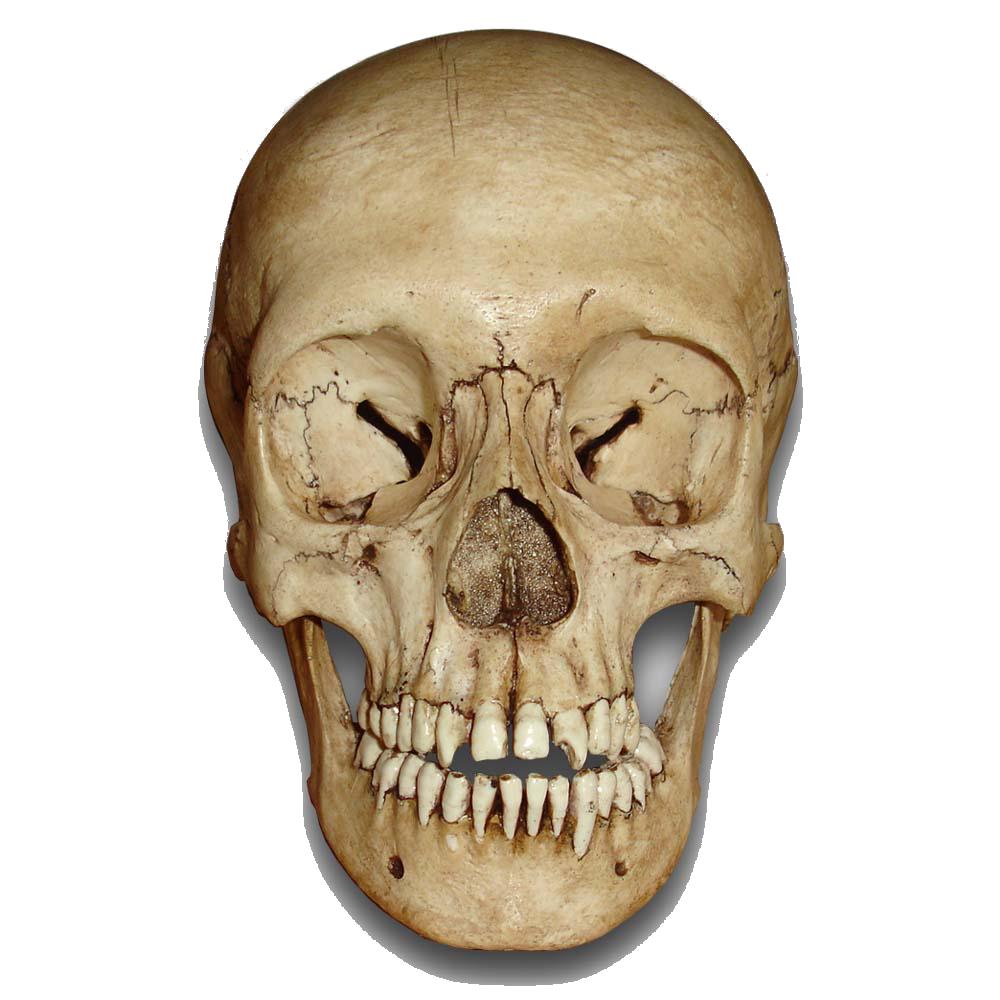 Skull PNG - 15816