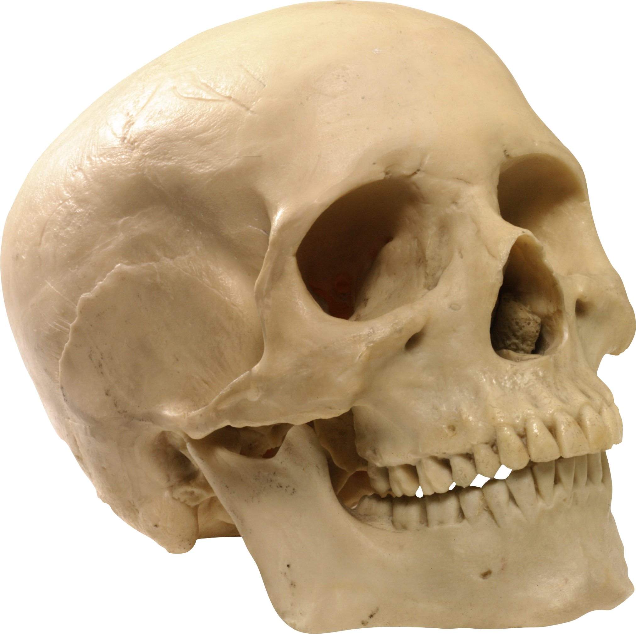 Skull PNG - 15799
