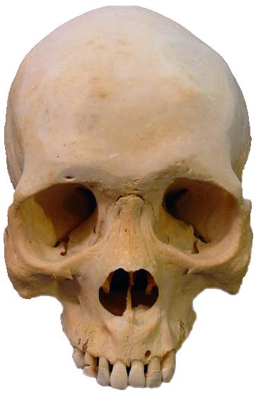 Skull PNG - 15805