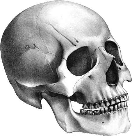 Skull PNG - 15812