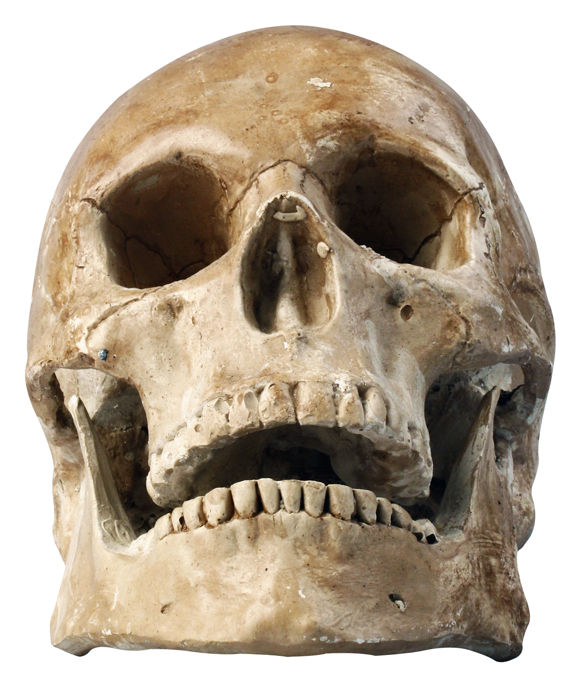 Skull PNG - 15803