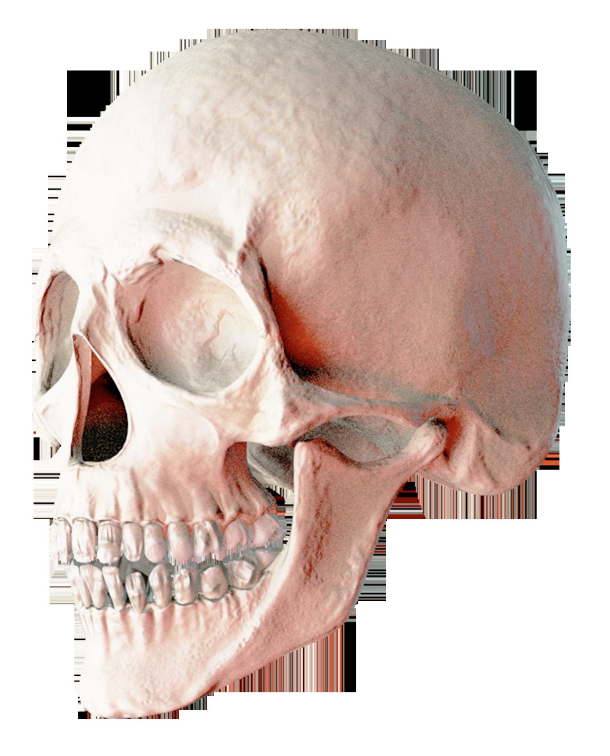 Skull PNG Transparent Image - Skull PNG