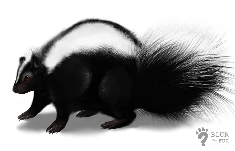 Skunk PNG - 17752