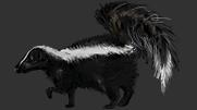 Skunk PNG - 17745