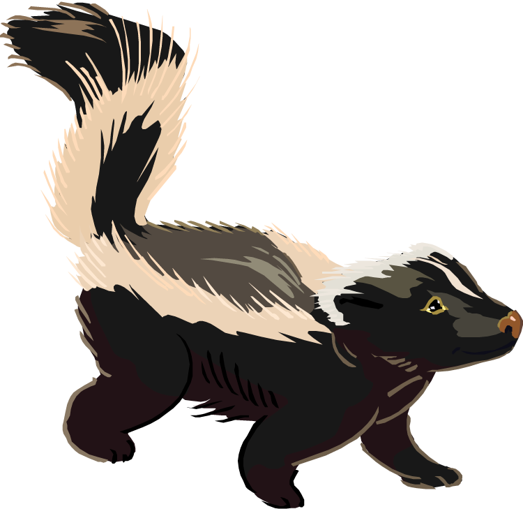 Skunk PNG - 17748