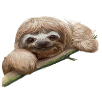 Sloth Picture PNG Image - Sloth PNG