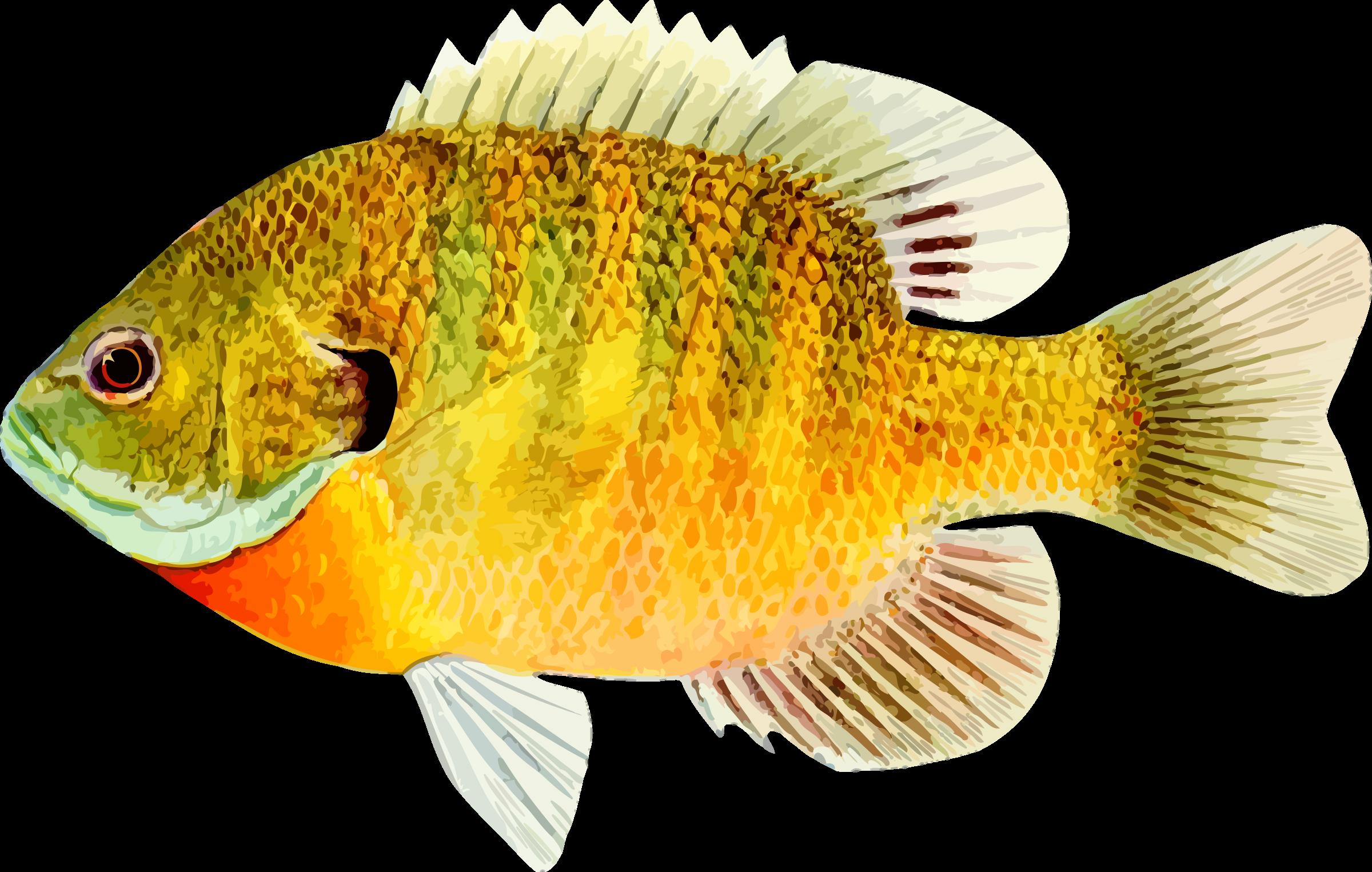 Small Fish PNG HD - 146652