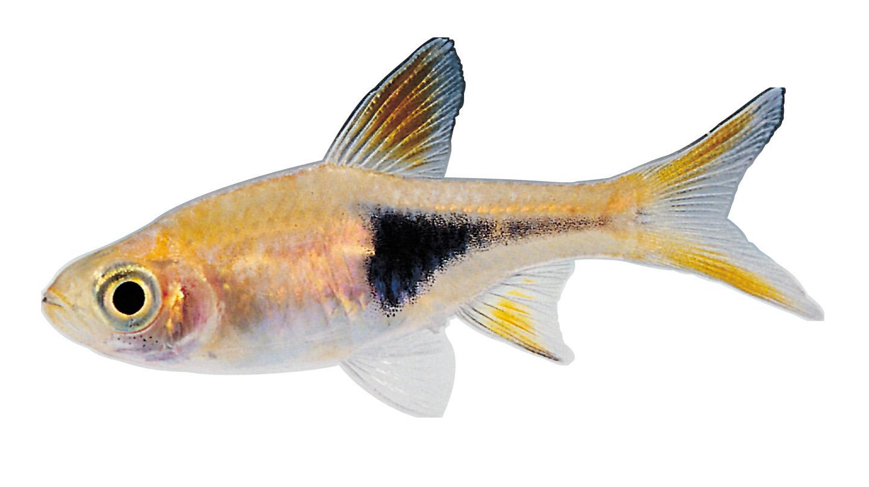 Small Fish PNG HD - 146647