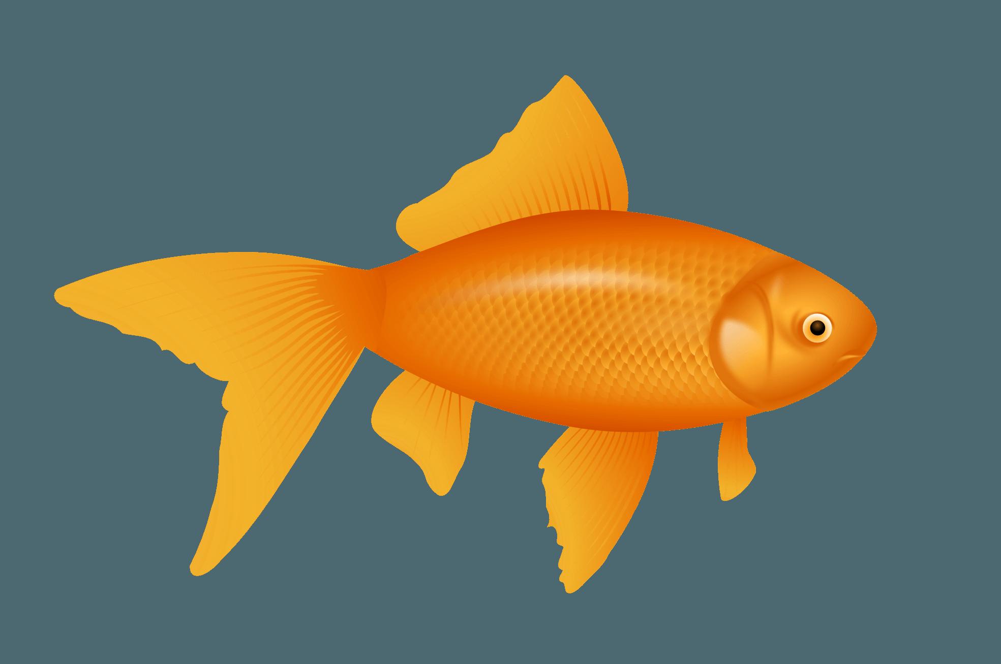 Small Fish PNG HD - 146651