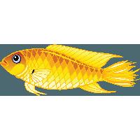 Small Fish PNG HD - 146650