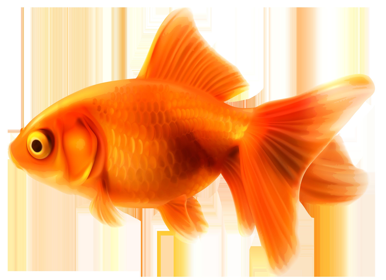 Small Fish PNG HD - 146648