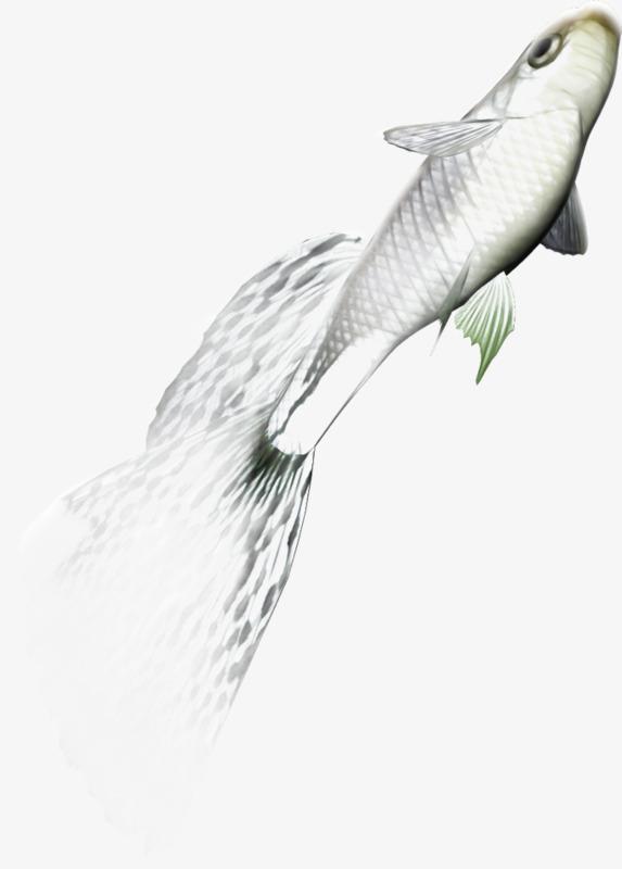 Small Fish PNG HD - 146663
