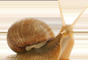 Snail PNG - Snail HD PNG