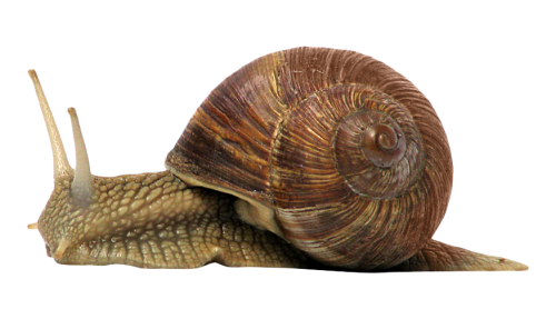 Snail PNG Transparent Image - Snail HD PNG