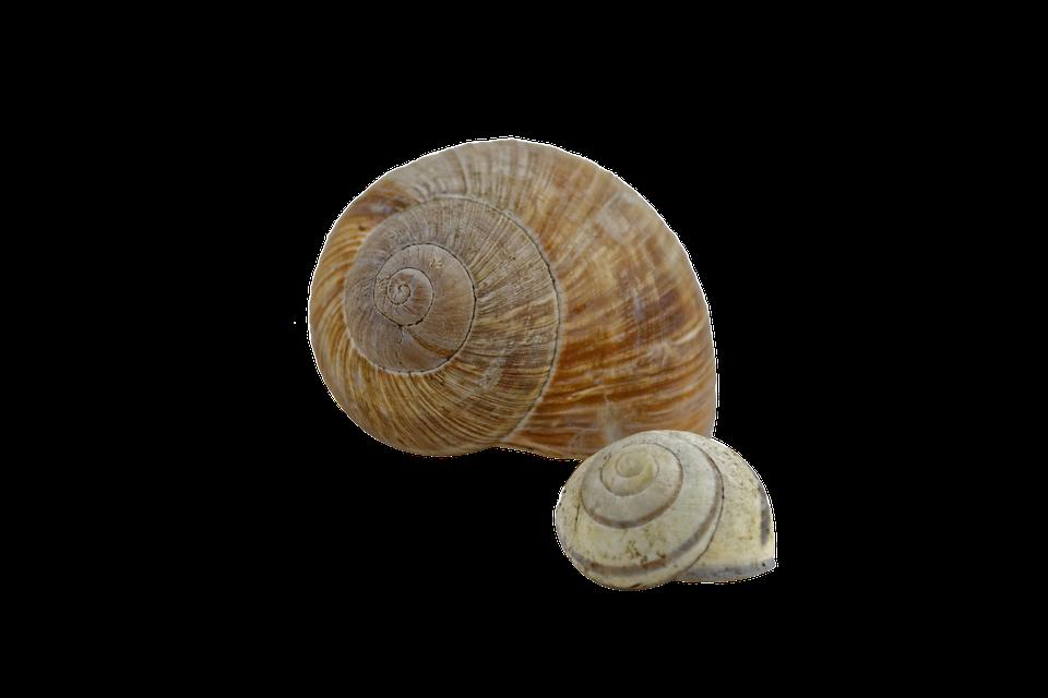 snail shell spiral - Snail HD PNG