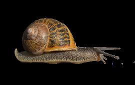 Snails - Snail HD PNG