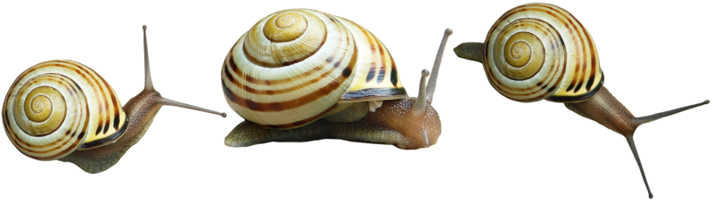 snails png by gd08 PlusPng.com  - Snail HD PNG