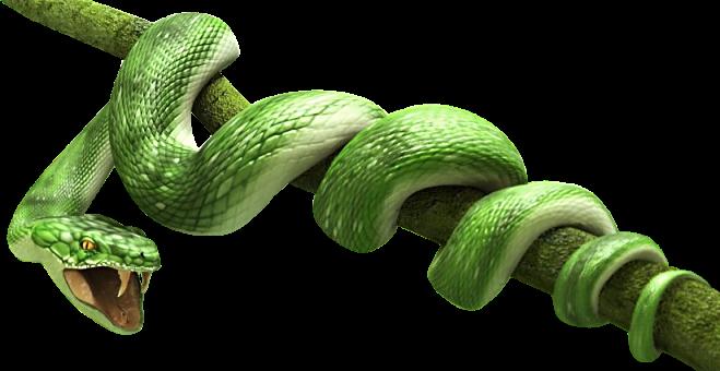 Green Snake PNG Transparent Image - Snake HD PNG