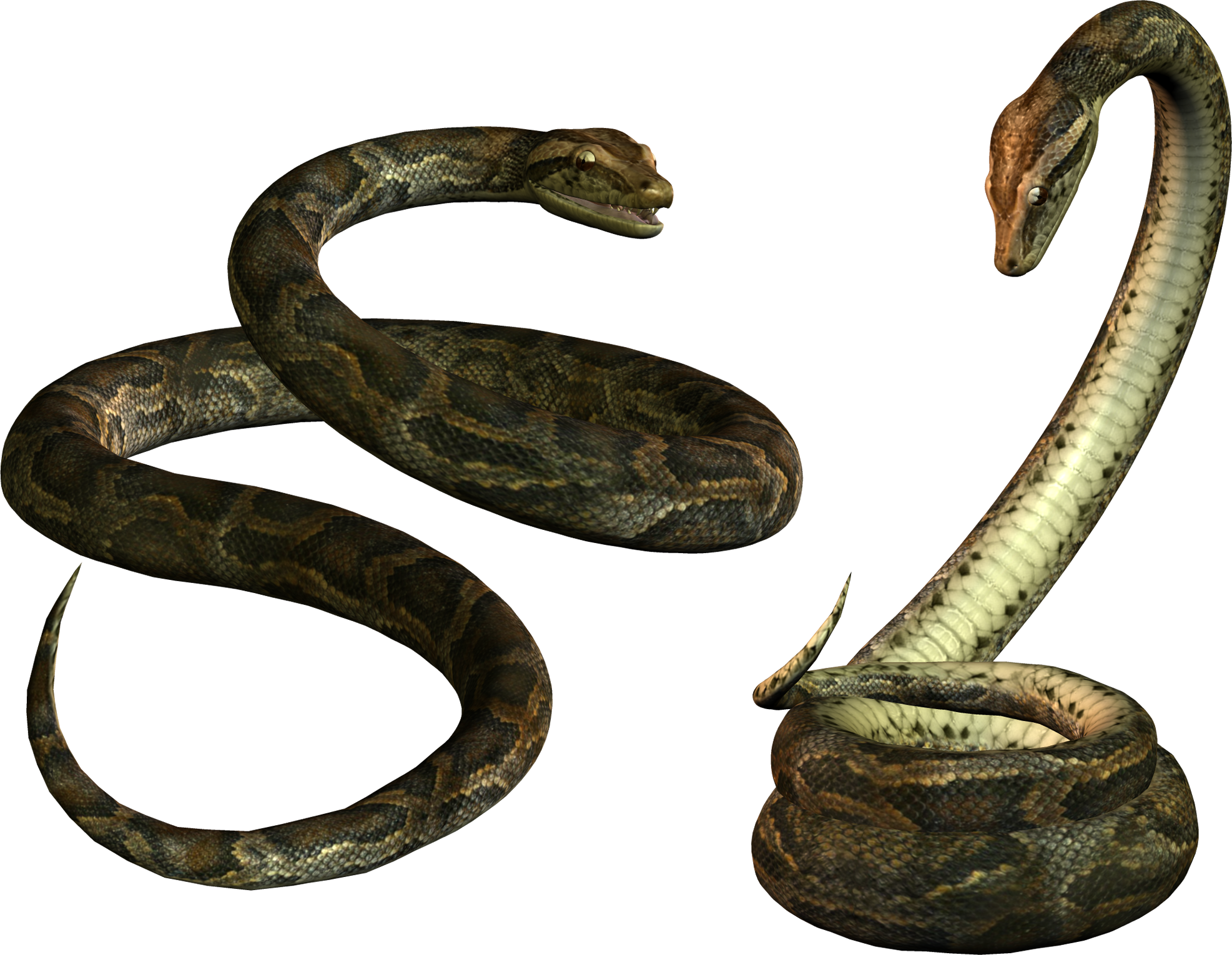 Snake HD PNG - 92995
