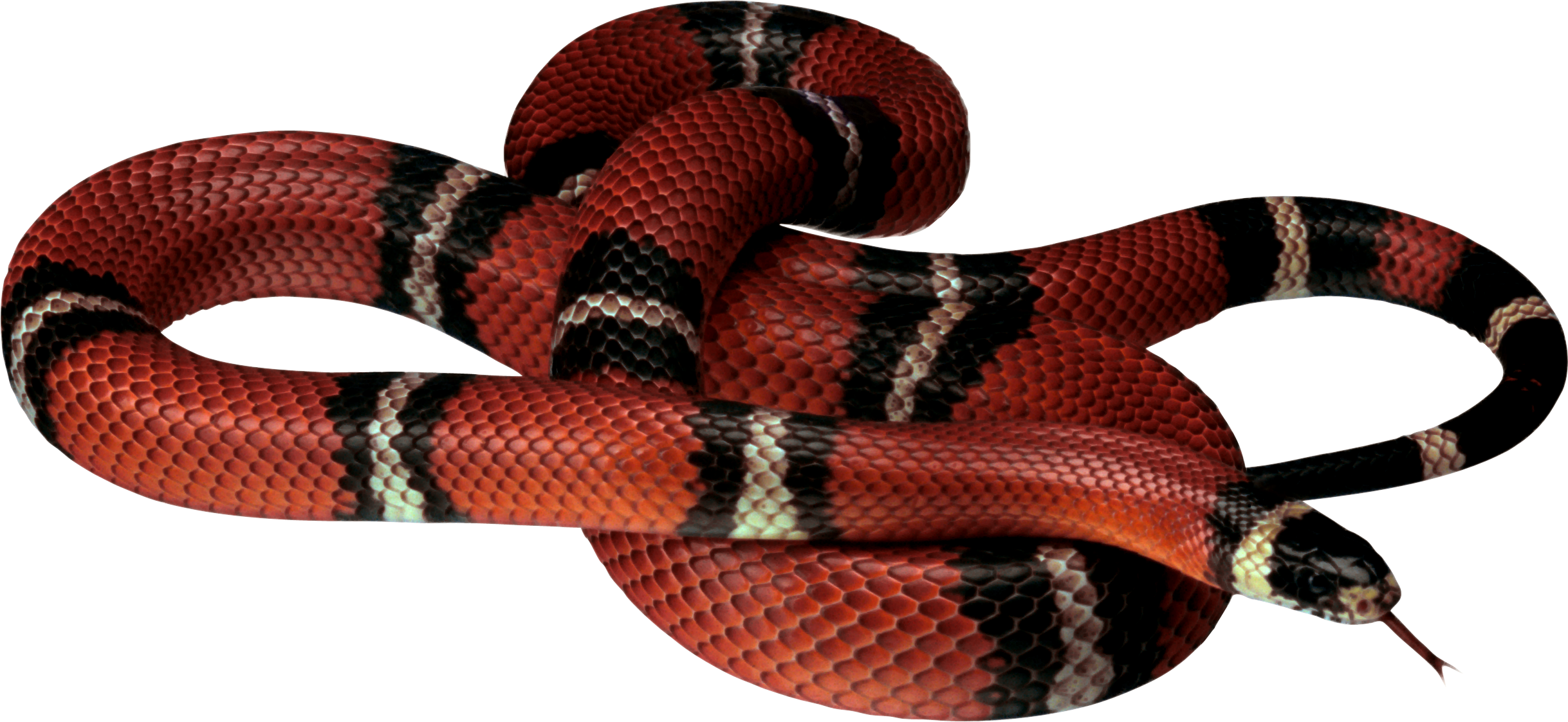 Snake HD PNG - 93002