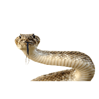 Snake HD PNG - 92992