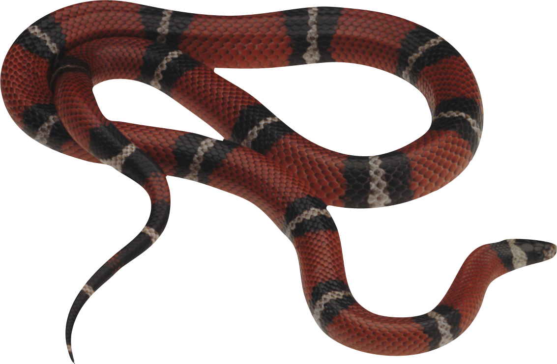 Snake PNG - 1062