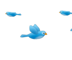 bird. Moonlight ♡. Moonlight ♡ · Snapchat Filters ♡ - Snapchat Filters PNG