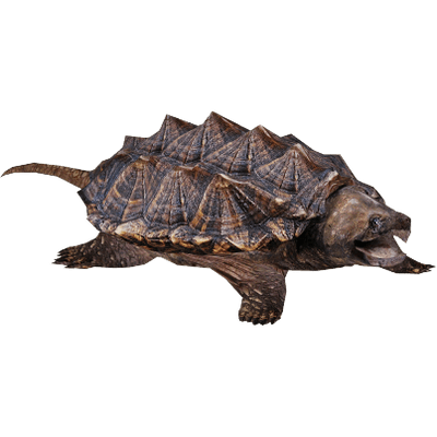 Snapping Turtle PNG-PlusPNG.com-400 - Snapping Turtle PNG