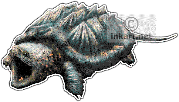 Alligator Snapping Turtle Art decal - Snapping Turtle PNG
