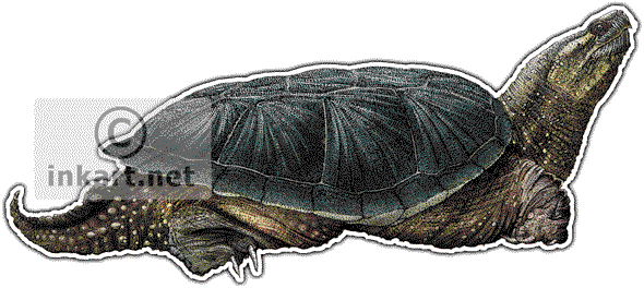 Common Snapping Turtle Art decal - Snapping Turtle PNG