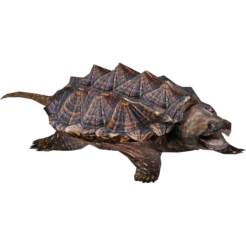 Download Snapping Turtle PNG images transparent gallery. Advertisement - Snapping Turtle PNG