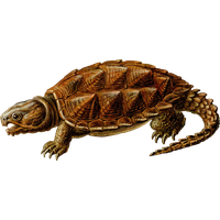 Snapping Turtle Free Download Png PNG Image - Snapping Turtle PNG