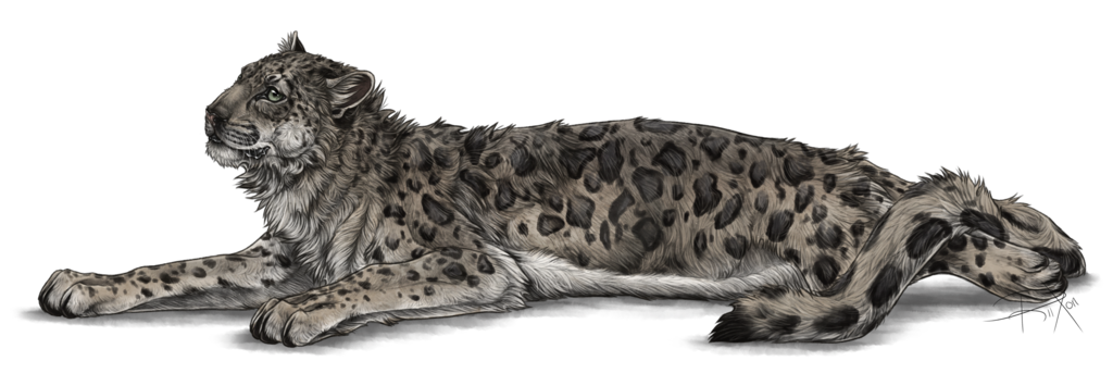Flirtatious Snow Leopard by Riixon PlusPng.com  - Snow Leopard PNG