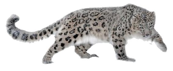 Leopard PNG HD - Snow Leopard PNG