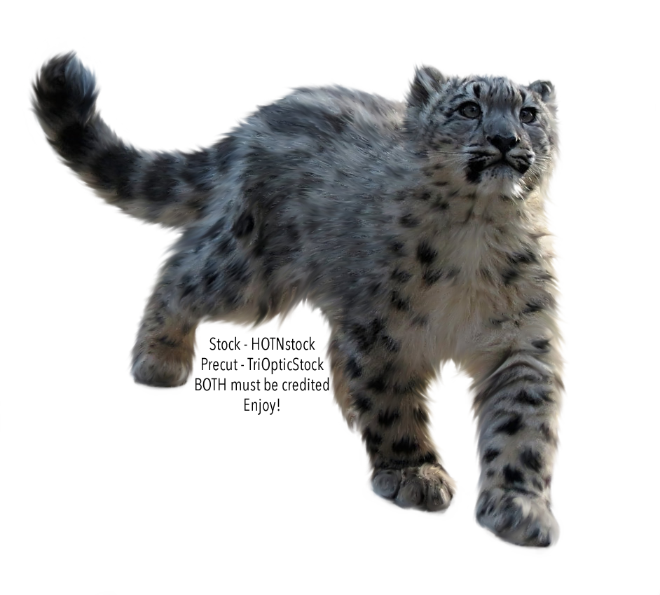 PRECUT Stock - Snow Leopard by TriOpticStock PlusPng.com  - Snow Leopard PNG