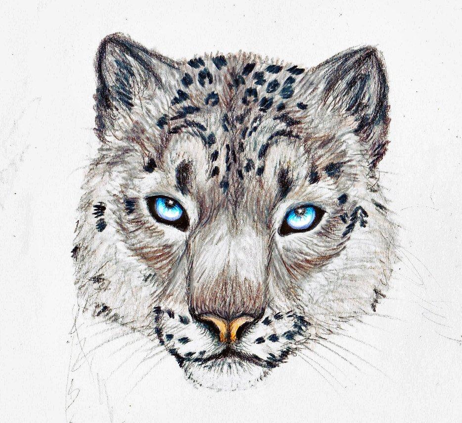 Snow Leopard by SingapuraCat PlusPng.com  - Snow Leopard PNG