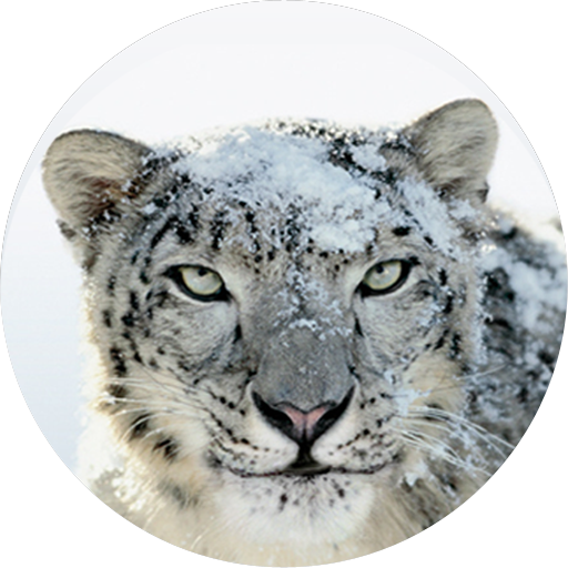 Snow Leopard support is dead, or so it seems; time to upgrade or lock down  (update: OS X Lion, Mountain Lion, too) - JimmyMac - Snow Leopard PNG