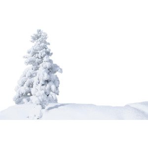 snow trees.png - Winter Snow PNG