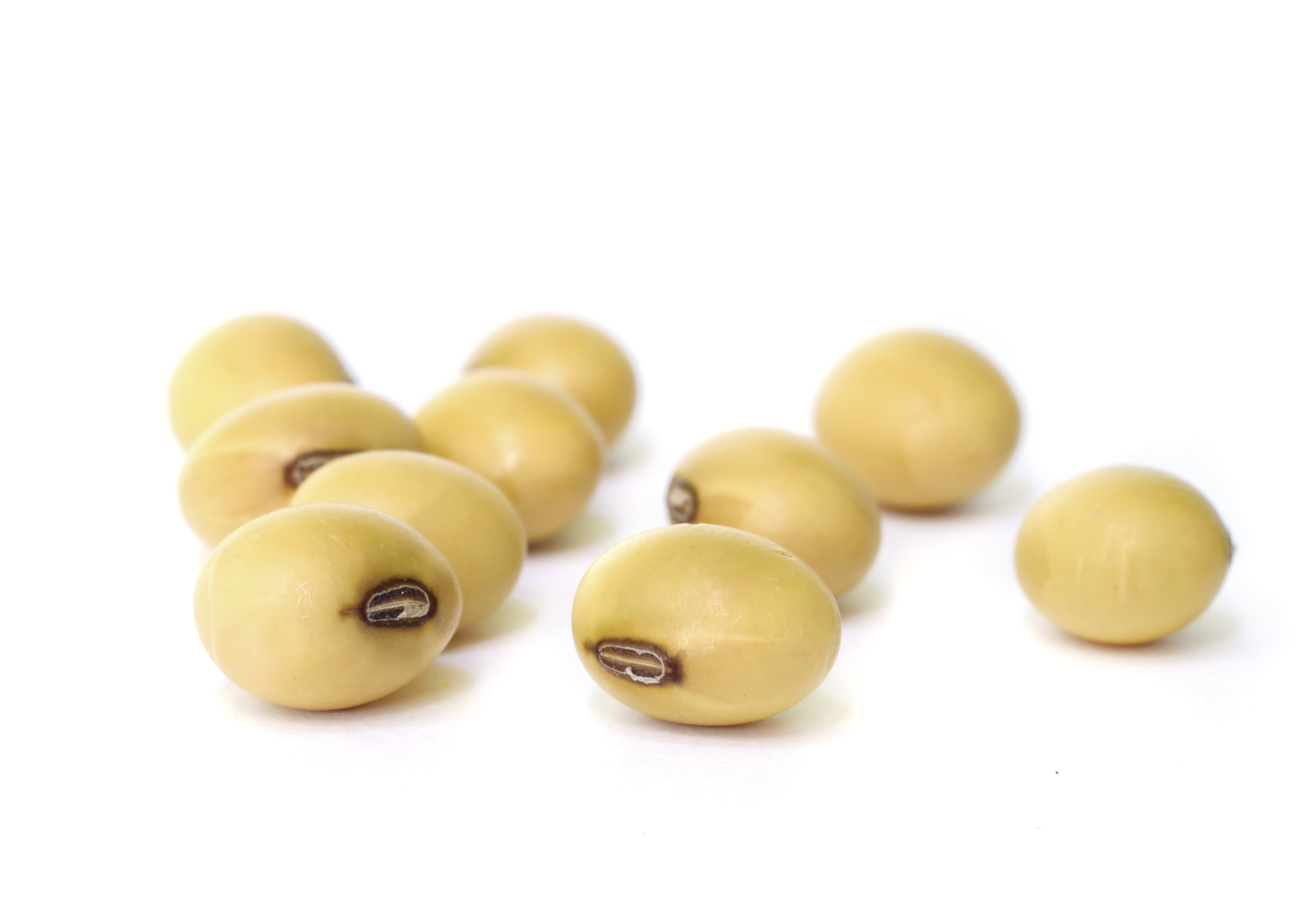 Soybean Seed PNG-PlusPNG.com-3055 - Soybean Seed PNG