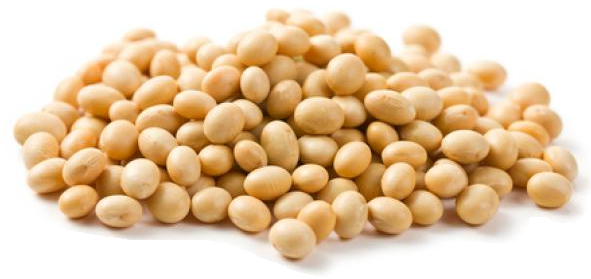 Canada Soybeans, Canada Soybeans Manufacturers and Suppliers on Alibaba pluspng.com - Soybean Seed PNG