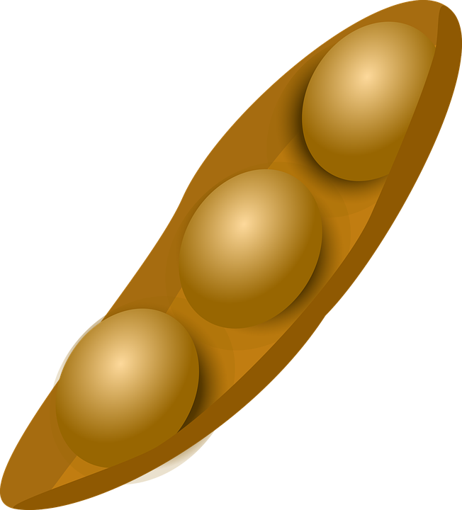 pin Seeds clipart soybean #10 - Soybean Seed PNG