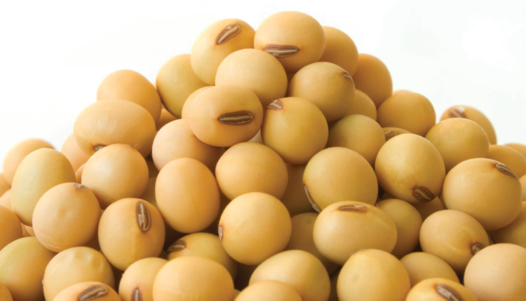 Soybean Seed PNG - 86557