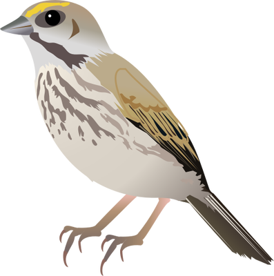 Sparrow PNG - 2982