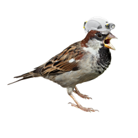 Sparrow PNG - 2967