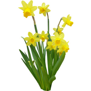 Spring Flowers (41).png - Spring PNG