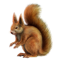 File:Huge item red squirrel 01.png - Squirrel HD PNG